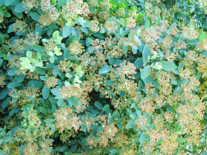 Botany Full