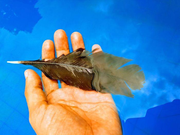 Que sua alma seja leve Human Hand Blue Holding Personal Perspective Close-up Sky