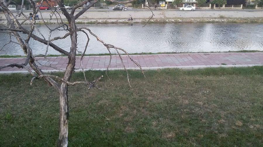 River Tree Town Eyeempic 🌳☀
