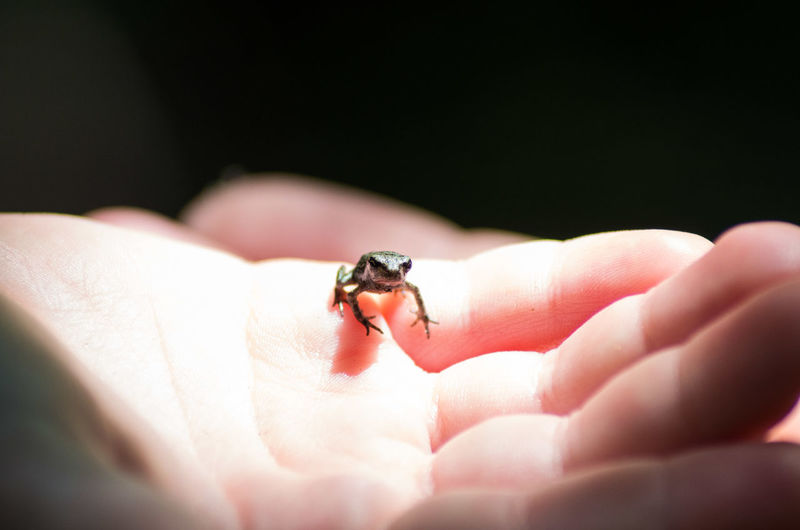 Frog Hand Close-up Wildlife Human Finger Nature Photography Natur Close Up Photography