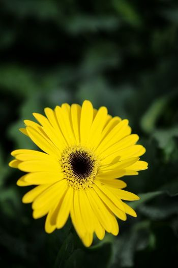 Flower Yellow Flower Head Beauty In Nature Petal Nature Freshness Fragility Blossom Springtime Plant Pollen Growth Close-up Outdoors Sunflower No People Day