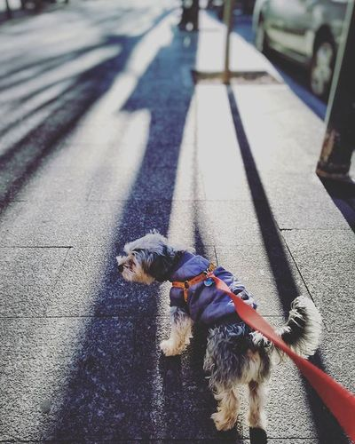 8/365 🐶 paseando con Fredy Igersalbacete Igersclm Igersspain 365project 365project 365project2016 365days 365 Proyecto365 Proyecto365aniswit
