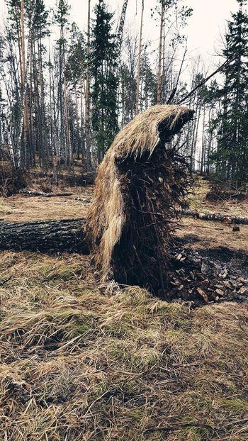 Krasnoyarsk #krasnoyarsk #Mana #siberia #kvadro #offroad Tree Sunlight Sky Growing Toadstool Fungus Fly Agaric Mushroom Bud Lily Pad Growth Water Drop Ivy Cattail Lichen Mushroom Stem Young Plant Blade Of Grass Full Frame Bark Woods