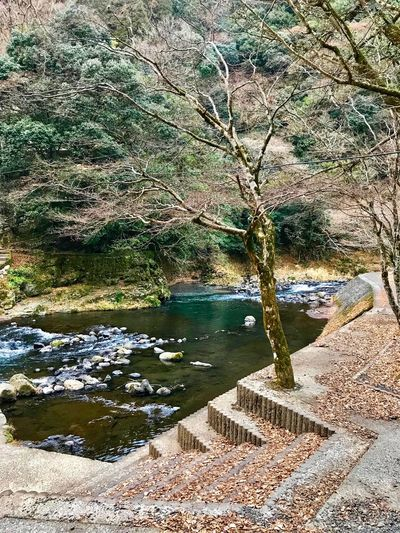 down below the waterfall Kusu, Japan Cloudy Morning Nature Water Beauty In Nature Outdoors Scenics Tranquil Scene Tranquility Sky Travel Destinations River Tree Day No People Landscape