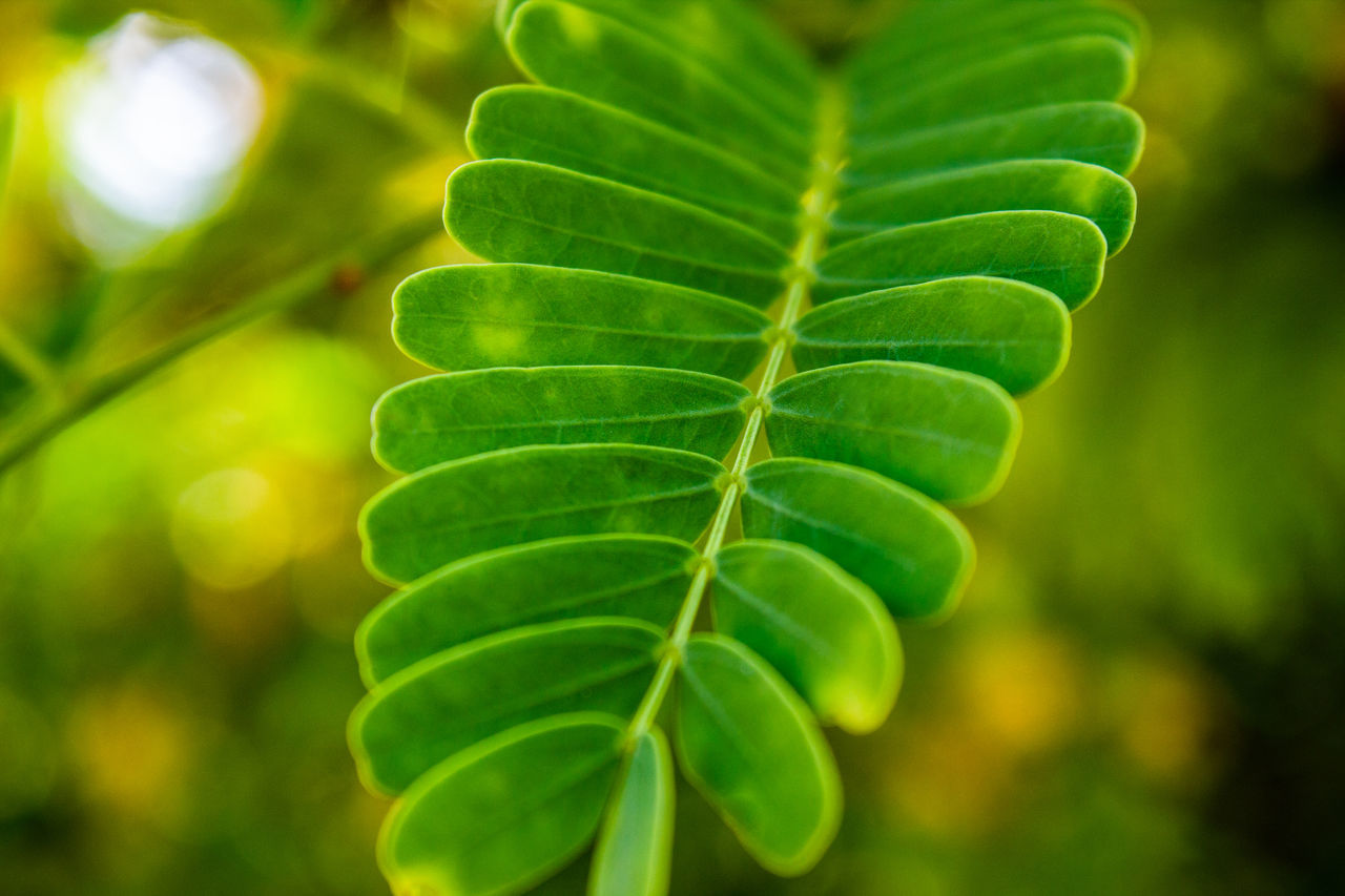leaf, green color, growth, nature, plant, beauty in nature, freshness, focus on foreground, close-up, no people, fragility, outdoors, day