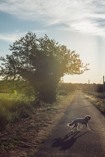 Country Road Field France Road Rural Air Clean Countryside Dog Fresh Golden Hour Organic Pet South Of France Summer Sunset Vacation