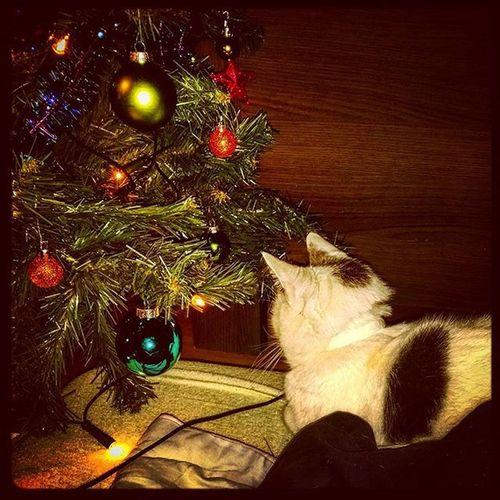 Monster - X-mas Repentance Instacat Xmas Christmas Cat Christmastree Kitty Badkitty Purrrr Lazykitty Repentance Repent