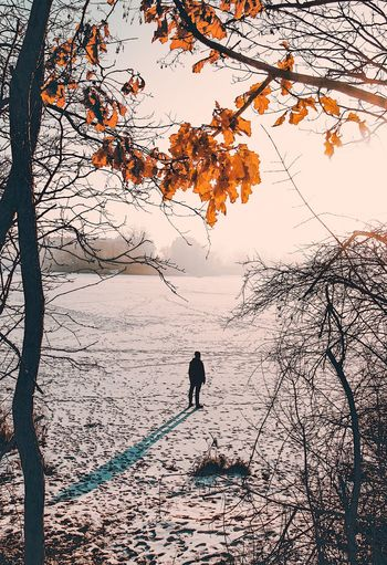 Cold Temperature Winter Tree Full Length Branch Nature Snow Outdoors Beauty In Nature One Person Autumn Day Warm Clothing Bare Tree Real People Landscape Men Only Men Shades Of Winter