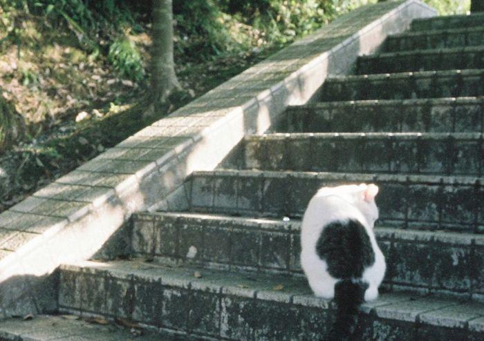 Cat ハーフ ハーフカメラ フィルム First Eyeem Photo