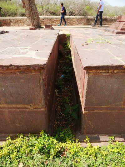Original Drainage Channel Weeds Algae Ranthambore India The Secret Spaces