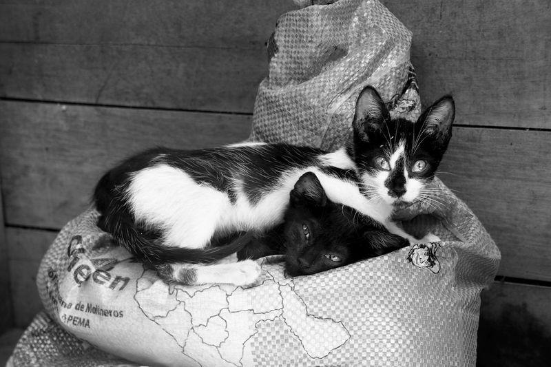 Animal Animal Love Animal Themes Black & White Cat Cats Domestic Animals Domestic Cat Feline Kittens Laziness Mammal No People Pets Resting Siblings