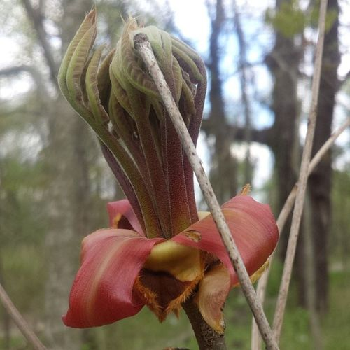 Does anyone know what this Strange looking Flower / Plant is?? Nature Outdoors Neverbeforeseen (by me) Weird Leaves Tree Trees Woods Forest Nofilter