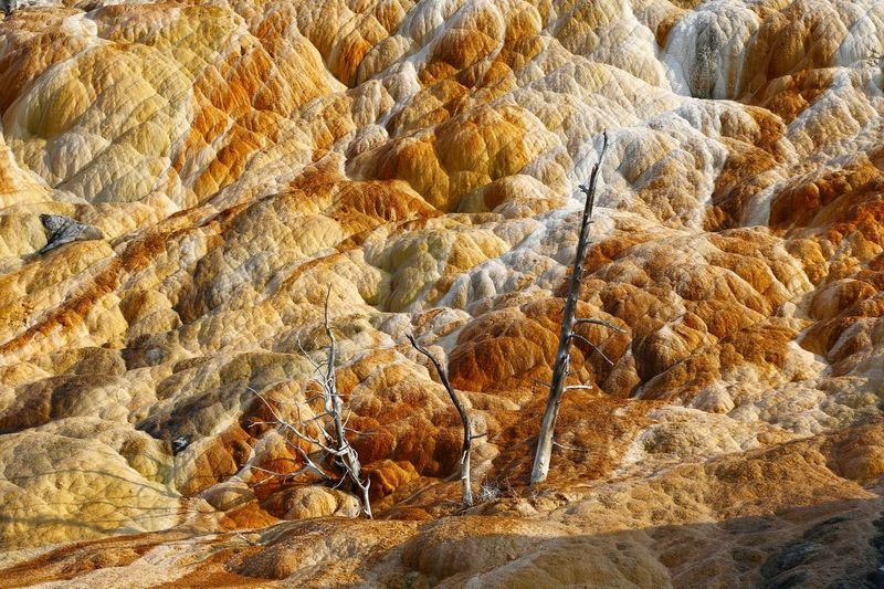 Hot Springs Striations Yellowstone National Park Animal Themes Close-up Day Dead Trees Geothermal Activity Hot Spring Nature No People Outdoors