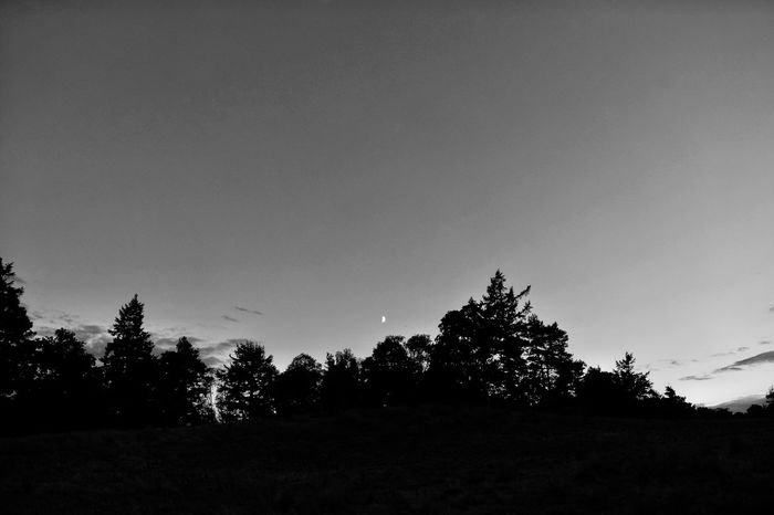 Moonlit backdrop Tree Silhouette Clear Sky Tranquil Scene Tranquility Copy Space Growth Scenics Outline Nature Beauty In Nature Outdoors Day Dark Solitude Plant Non-urban Scene High Section Sky Remote Devil's Pulpit Scotland Moon Siluette Monochrome Photography