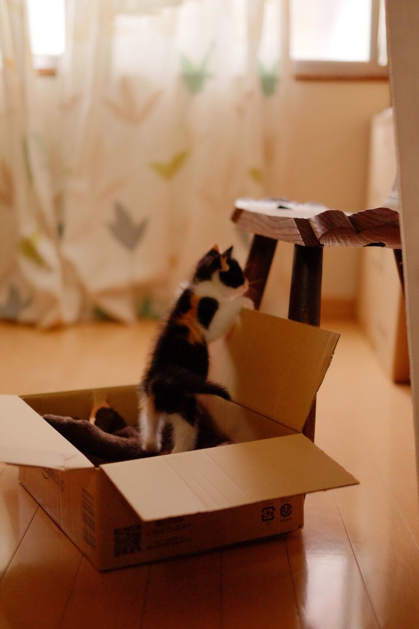 Close-Up Of Kittens In Box