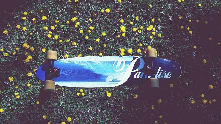 Longboarding Paradise Longboards Paradise Dandelion Fields