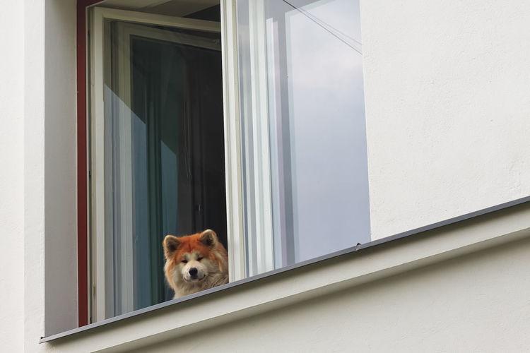 Portrait of dog seen through glass window