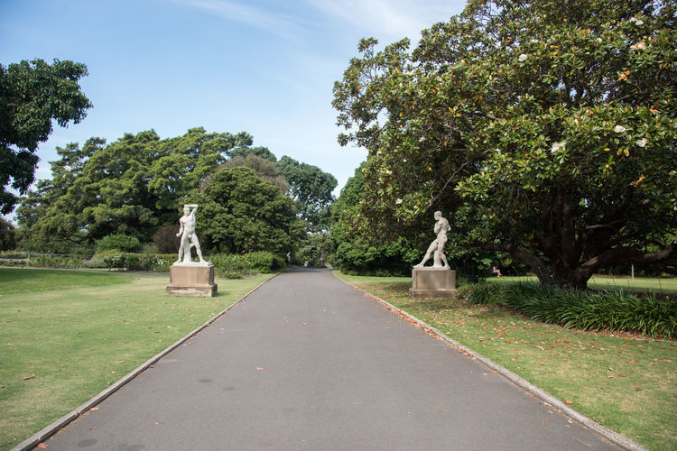 Sydney,NSW,Australia-November 20,2016: The white boxer sculpture with flowering magnolia tree at the Royal Botanic Gardens in Sydney, Australia. ArtWork Australia Boxer Footpath Magnolia Path Royal Botanic Gardens Sidewalk Statue Tree Beauty In Nature Cultivated Day Diminishing Perspective Greenery Growth Human Representation Lush Foliage Nature Outdoors Sculpture Sky Sydney Tree White