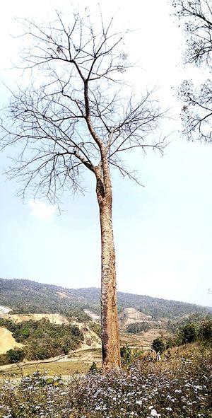 Tree Pixelated Bare Tree Sky Landscape