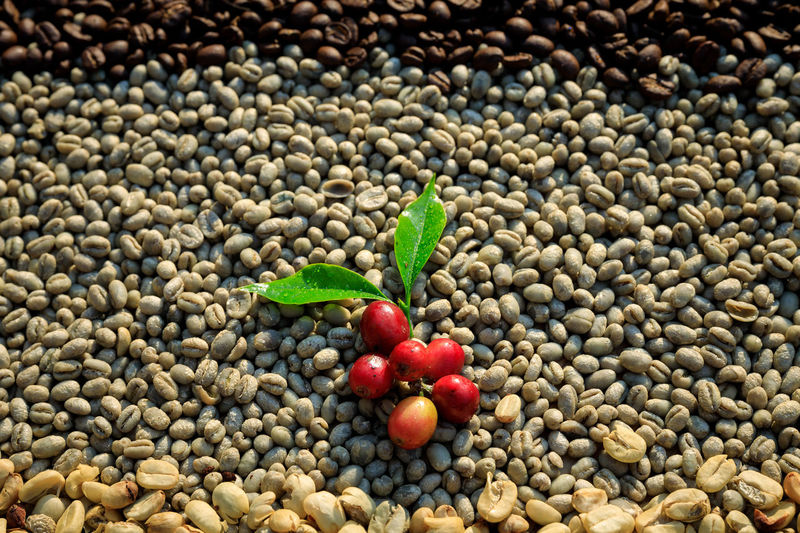 High angle view of berries on pebbles