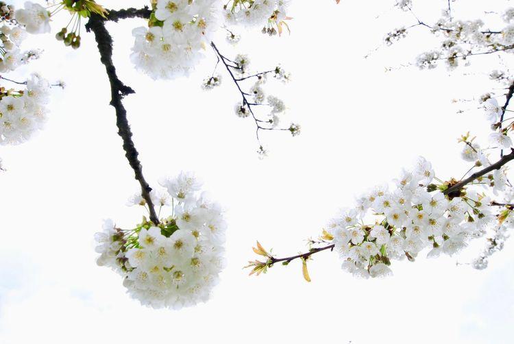 Spring ha