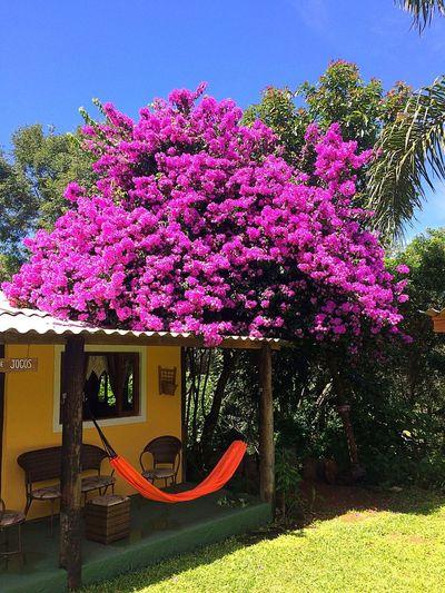 Ibiuna Resort Natureza Vida First Eyeem Photo