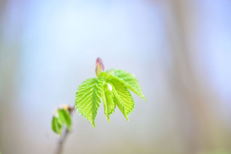 Leaf Plant Part Green Color Close-up Plant Beauty In Nature Growth Nature Focus On Foreground Selective Focus Day No People Fragility Beginnings Vulnerability  Outdoors Freshness New Life Tranquility Copy Space Coniferous Tree