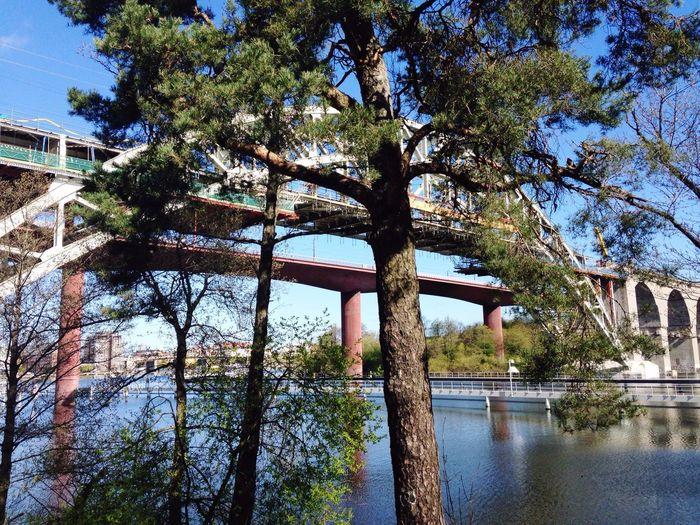 Bridge Pine Watercolor Blue Sky Water_collection Årstabron Stockholm, Sweden