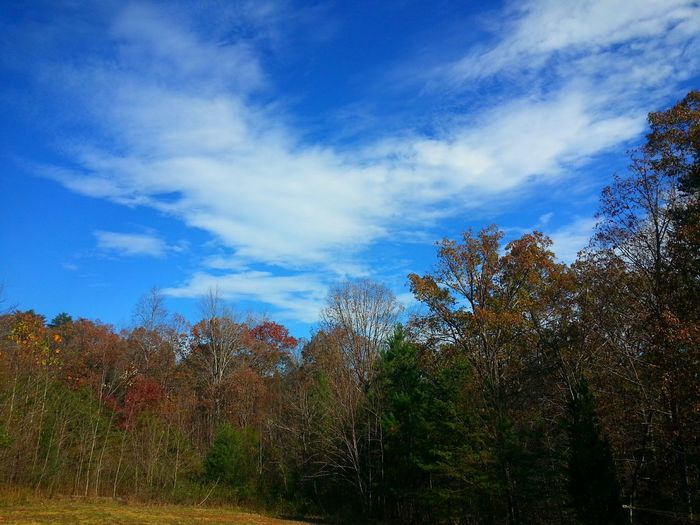 EyeEm Nature Lover Tupponce Photography David Tupponce United States Of America Virginia Gretna, Va Usa Autumn Colors Leaves Are Falling Colour Of Life