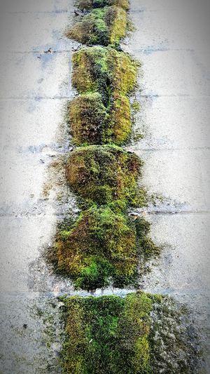 Moss Day