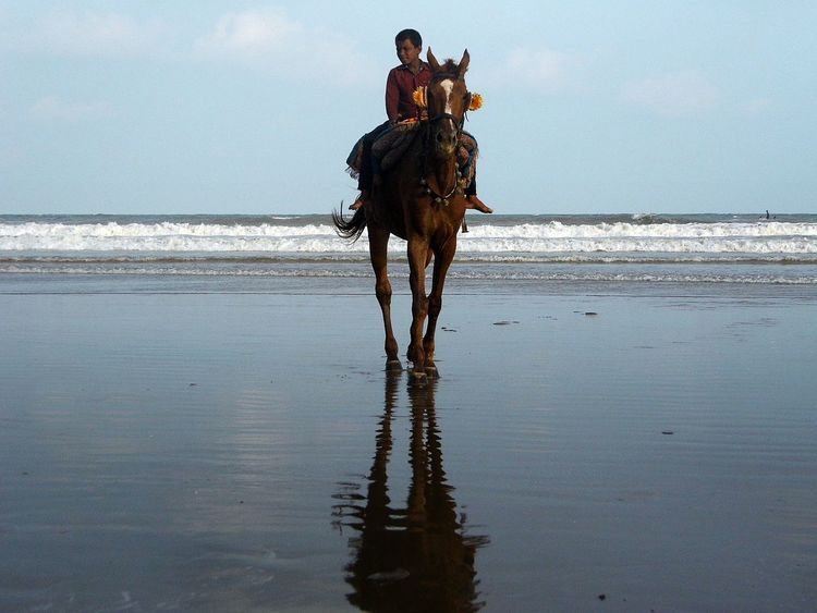 Beach Horse Animal Themes Beach Beach Photography Beachphotography Day Domestic Animals Escapism Full Length Getting Away From It All Hobbies Horse Horse Riding Mammal One Animal Outdoors Recreational Pursuit Sand Sea Shore Side View Standing Water Weekend Activities