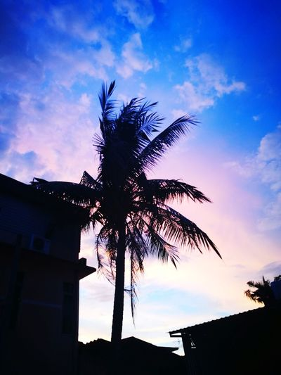 Coconut tree Cloud - Sky Sunset Tree Sky No People Nature Gloden Moments Glodentime Coconut Coconut Tree Thailand