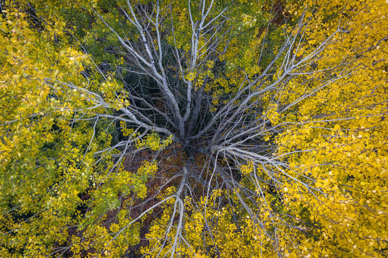 Just found this beautiful yellow tree in the forest near my autumn. Plant Beauty In Nature Yellow Growth Nature No People Day Autumn Tranquility Land Outdoors Tree Forest Aerial View Aerial Shot Drone  Dronephotography Yellow Tree Forest Photography Autumn colors Colors Calm Chill Natural Peaceful
