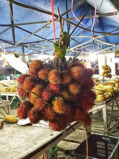 Low angle view of flowering plant for sale at market stall
