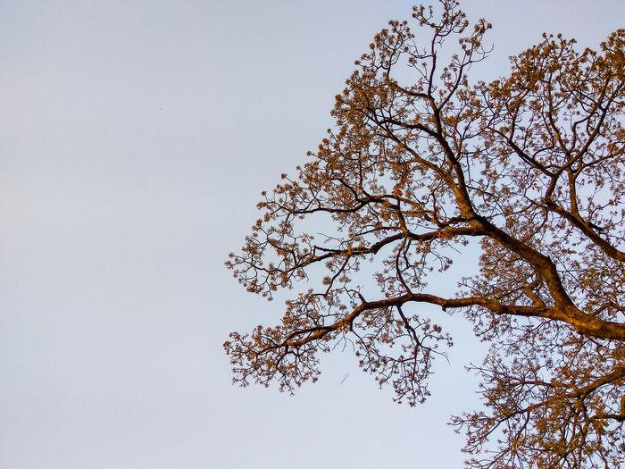 Branches Branch