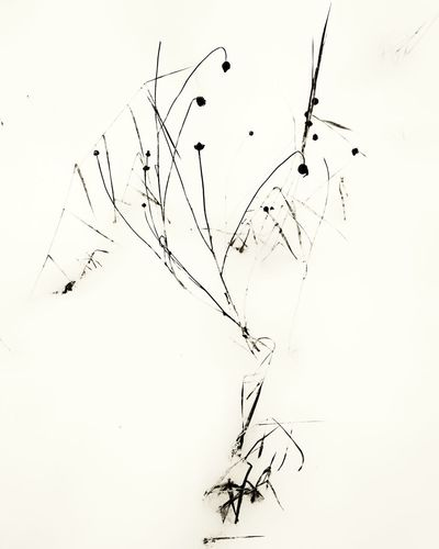 Bird Ink Flying