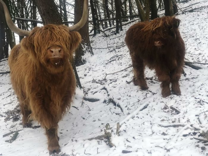 Snow Mammal