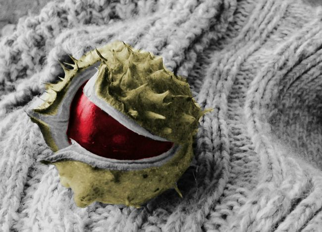 Chestnut Chestnuts Autumn Fall Seasons Colored Color Edit Edited Recolored Nature Macro Recolour Recolor Coloring Photo Editing Photoedit Mobilephotography Editing Edits