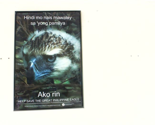 save the endemic Philippine eagle Text No People Close-up Philippine Eagle Philippine Eagle Center Davao City Philippines