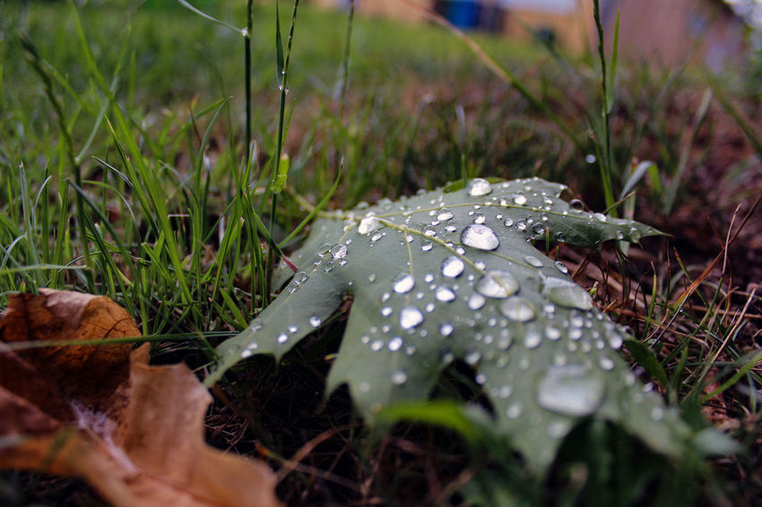 EyeEm Nature Lover Grass Green Rain Beauty In Nature Canon Close-up Day Fly Agaric Fly Agaric Mushroom Fragility Freshness Fungus Grass Green Grass Growth Leaf Leaves Mushroom Nature Nature_collection No People Outdoors Selective Focus Toadstool