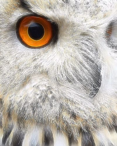 Skyler 💕 SiberischeOehoe SibiricusEagleOwl Owl Bird Photography EyeEm Birds EyeEm Best Shots Eye4photography  EyeEm Nature Lover Wildlife Owl Art