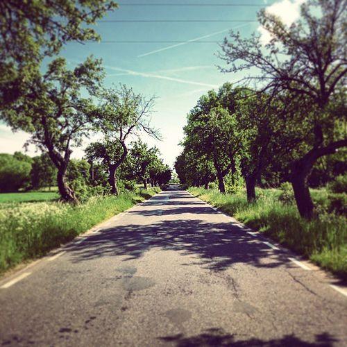 Road Straightroad Trees Emptiness Peace Calm Droga Drzewa Pustka Spokój