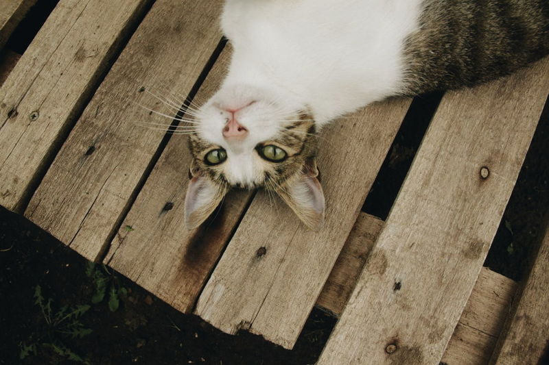 Domestic Cat Pets One Animal Feline Domestic Animals Animal Themes Mammal Animal Whisker High Angle View Looking At Camera Portrait No People Indoors  Day Kitten Close-up