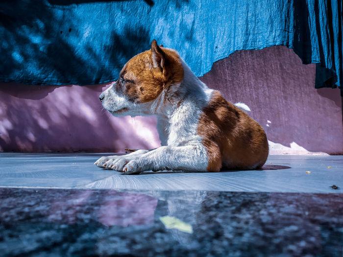 Dog sitting on floor