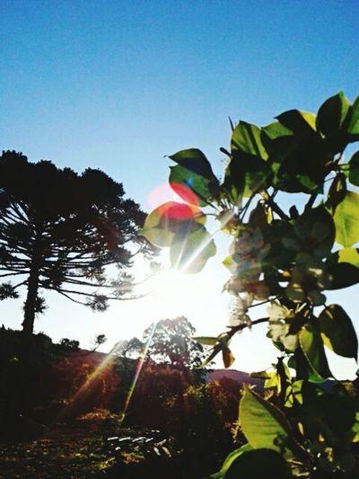 Sun Tree Sky Walpaper