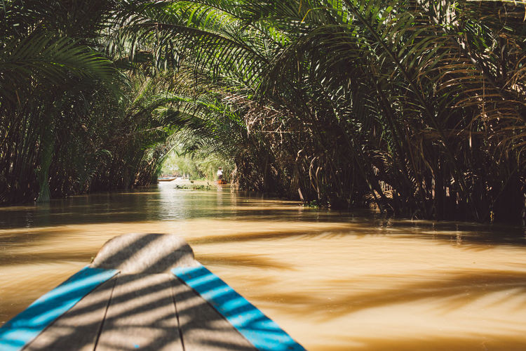 Mekong Vietnam Beauty In Nature Blurred Motion Day Forest Growth Motion Nature No People Outdoors Palm Tree Plant Reflection Sunlight Tranquility Transportation Tree Tropical Climate Water Waterfront