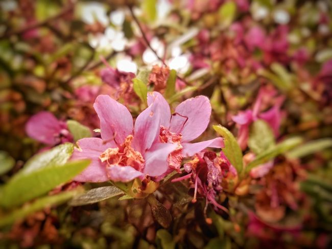 Flowers Flora Floral