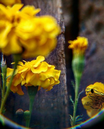 Amarelo uma cor que chama a atenção 📸 Flower Head Flower Yellow Close-up Plant Iris - Plant In Bloom Pollination Stamen Pollen Blooming Insect Blooming Orchid Blooming Orchid Insect Blooming Petal Daffodil Bee Daffodil Petal Bee Daffodil Daffodil Daffodil