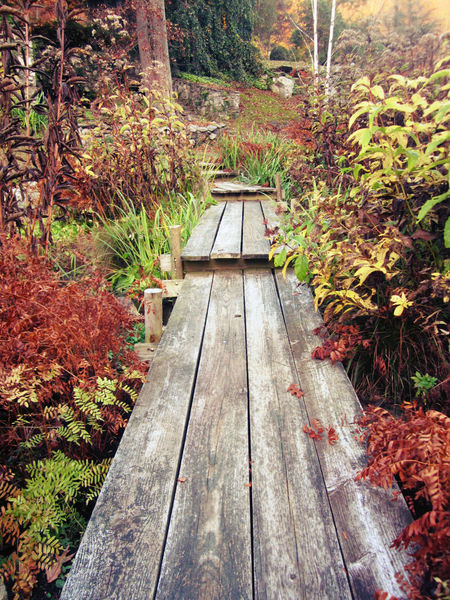 Autumn Fall Fall Beauty Garden Green Green Color Growing Growth Hudson Valley Lead The Way Leaf Narrow Path Plant The Way Forward Tree Wood Planks Wooden Bridge Wooden Walkway