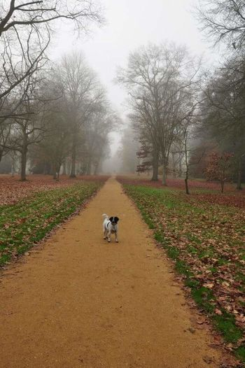 Tree Landscape Domestic Animals Dog Autumn Animal Themes Outdoors Countryside Beauty In Nature Autumn Colors Autumn Leaves Autumn Collection Dogslife Dog Photography Just Me And The Dog Rosie Colour Of Life Trees And Nature Tree_collection